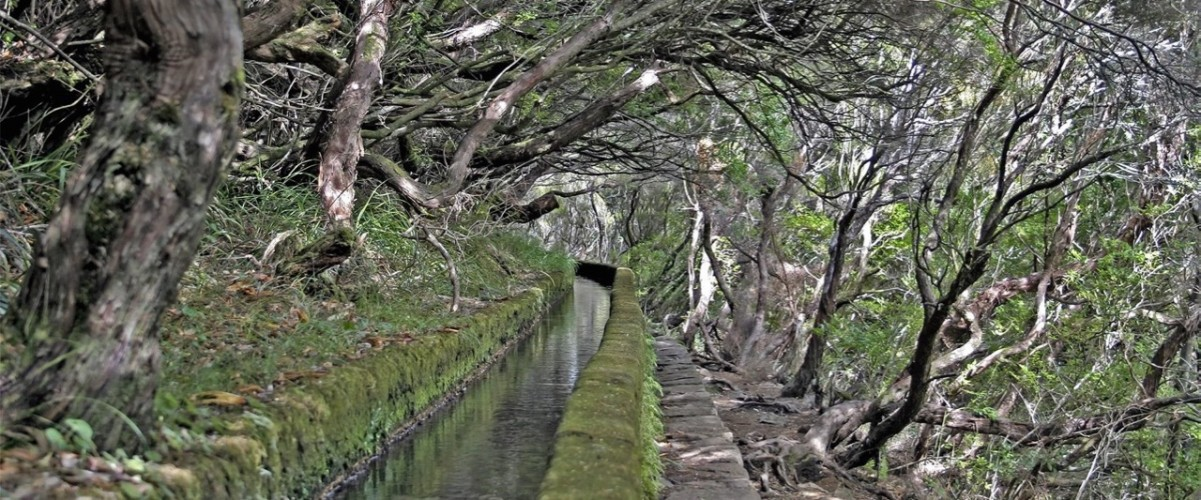 landscapes_trees_forests_waterways_water_500